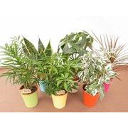 カラフルプラミックス ミニ観葉植物/観葉植物/モダン/インテリア/寄せ植え/ガーデニング