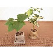 ウッドフェイクミックス皿付 ミニ観葉植物/観葉植物/モダン/インテリア/寄せ植え/ガーデニング