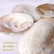 専用浄化パワーストーン置き皿★天然貝皿