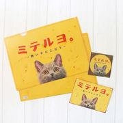 クリアファイル ねこ「むかしのネコ看板~ミテルヨ。~」