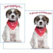 Stockwell Greetings グリーティングカード バースデー 犬×スカーフ