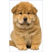Stockwell Greetings グリーティングカード 犬