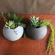お部屋をグッと華やかに枯れない植物で作る手軽な癒し空間【サキュレントウォールポット・L】